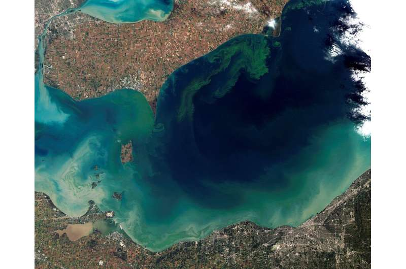 Research reveals harmful algal blooms' daily cycles