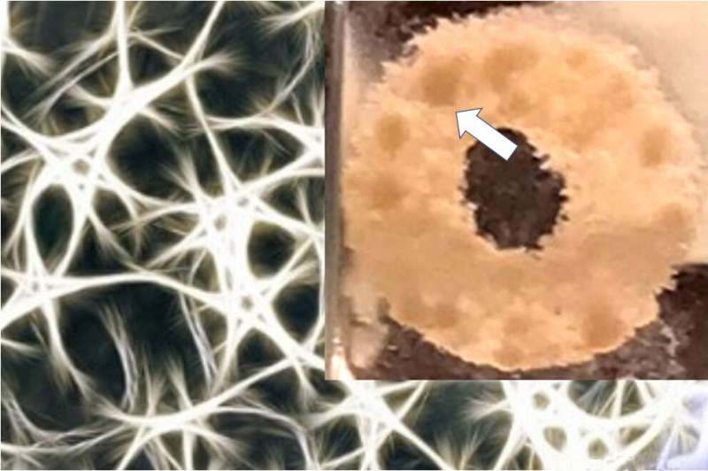 Scientists create brain-mimicking environment to grow 3D tissue models of brain tumors