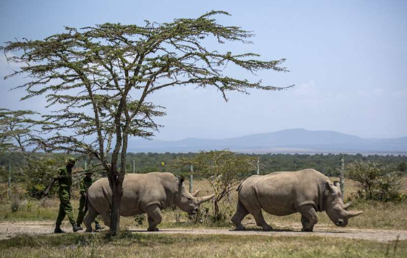 Scientists in Italy fertilize 7 northern white rhino eggs