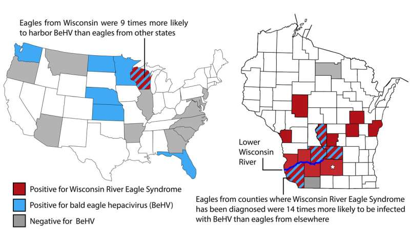 Newly discovered virus infects bald eagles across America