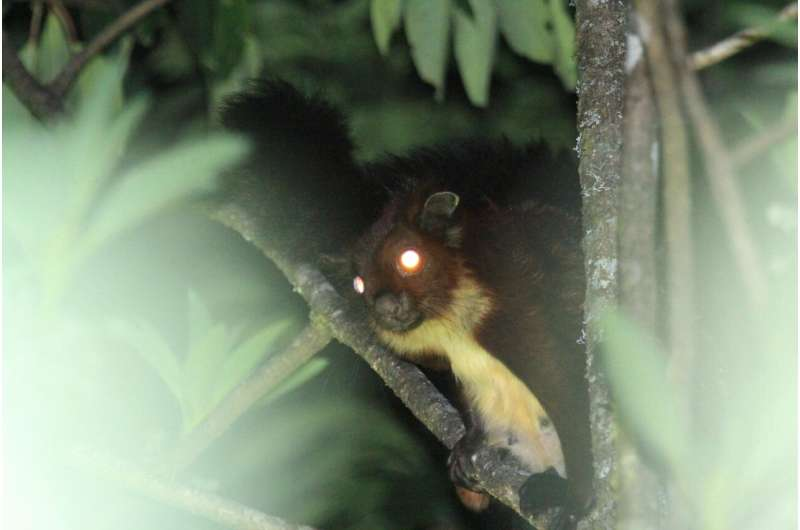 New species of flying squirrel from Southwest China added to the rarest and 'most wanted'