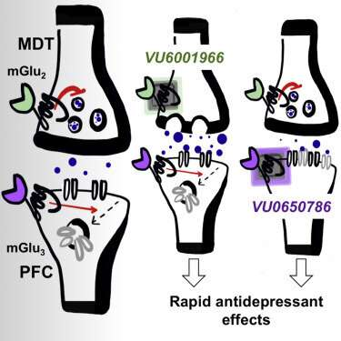 Study explores potential new class of antidepressants