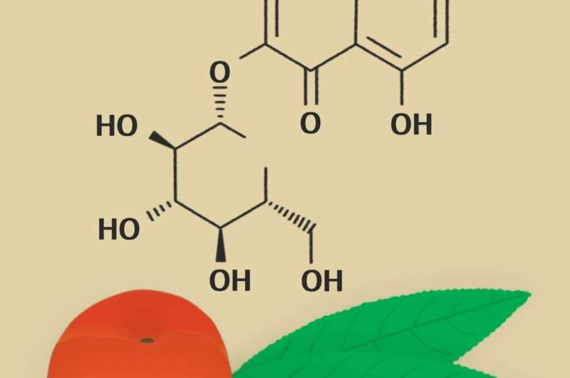 RUDN University biochemists linked polyphenols in peach leaves to the antioxidant effect of their extract