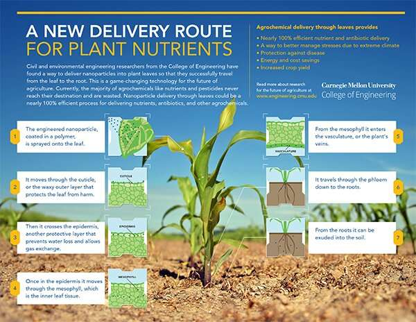 A new route for plant nutrient delivery