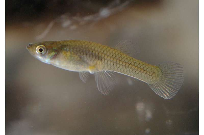 **Antidepressants polluting the water can change fish behaviour