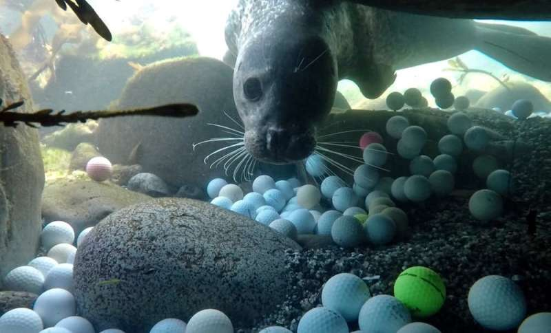 A teen scientist helped me discover tons of golf balls polluting the ocean