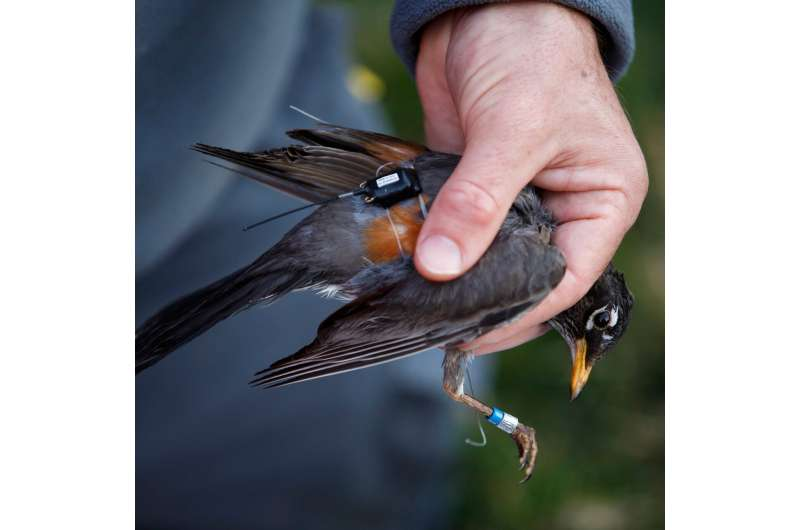 Birds outfitted with 'backpacks' to research environmental change
