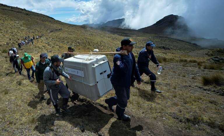 Environmentalists carry the two injured Andean condors to the spot in Cerrito where they were found, to be released back into th