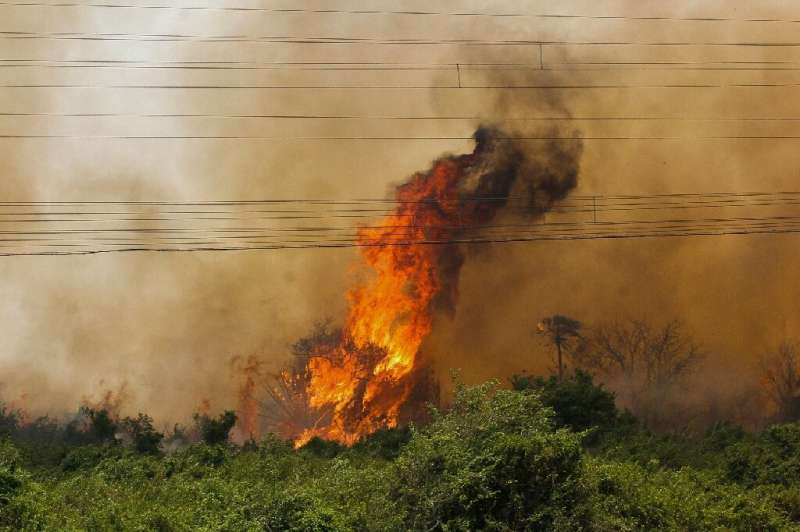 Handout picture released by Mato Grosso do Sul State Government showing a forest fire at the Pantanal ecoregion of Brazil on Oct
