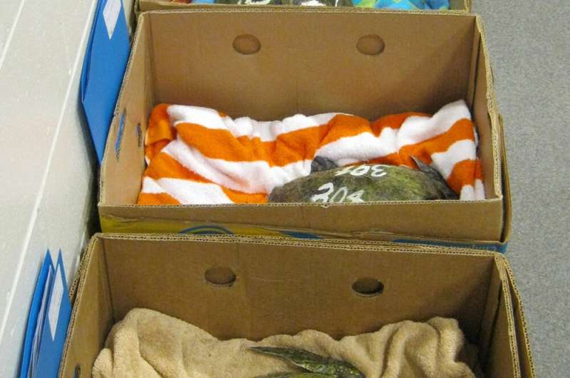 Live cargo: How scientists pack butterflies, frogs and sea turtles for safe travels