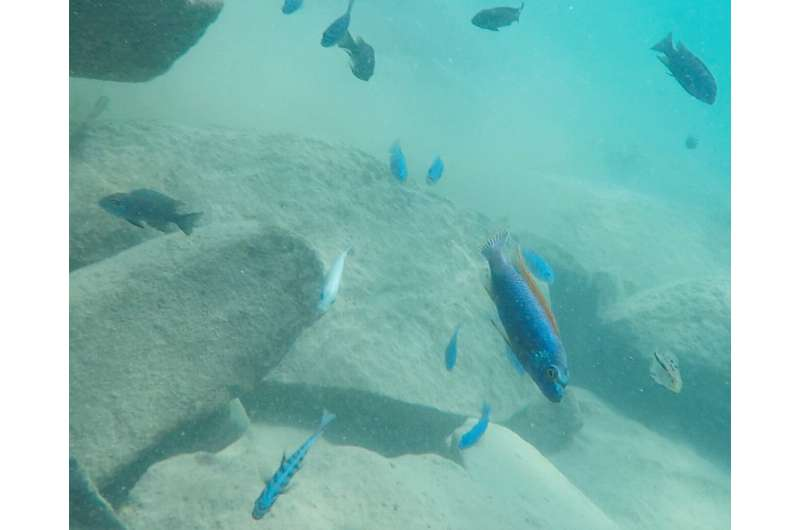 New insights into phenotypic complexity and diversity among cichlids
