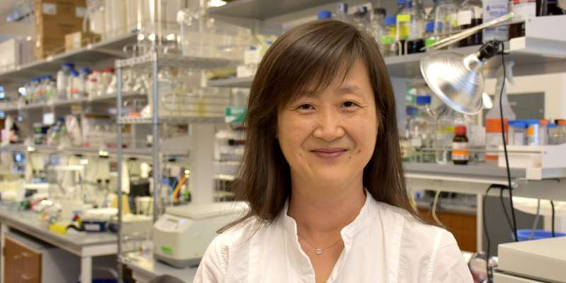 New mechanism fueling brain metastasis discovered at Wistar