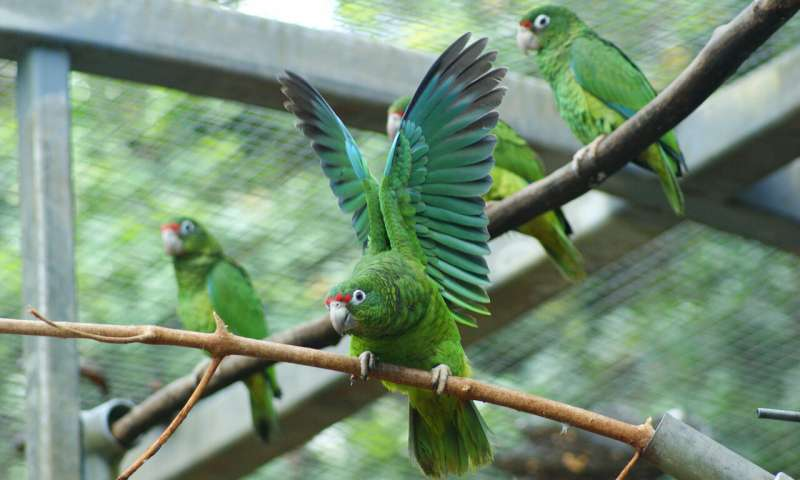 Researchers use genome mapping to save rare parrot species