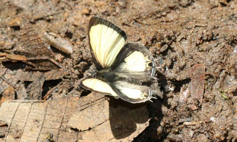 Shedding new light on West Africa's birds and butterflies