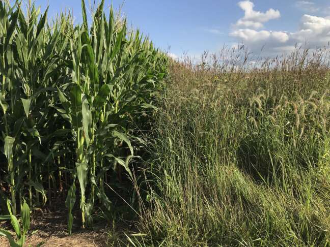 Study shows cover crops and perennials do not necessarily increase carbon storage in soil