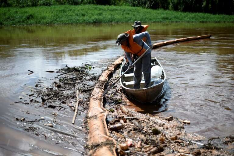 Researchers collect dead fish from a retention membrane installed at the Paraopeba River, Brazil, to try to retain mud, after th