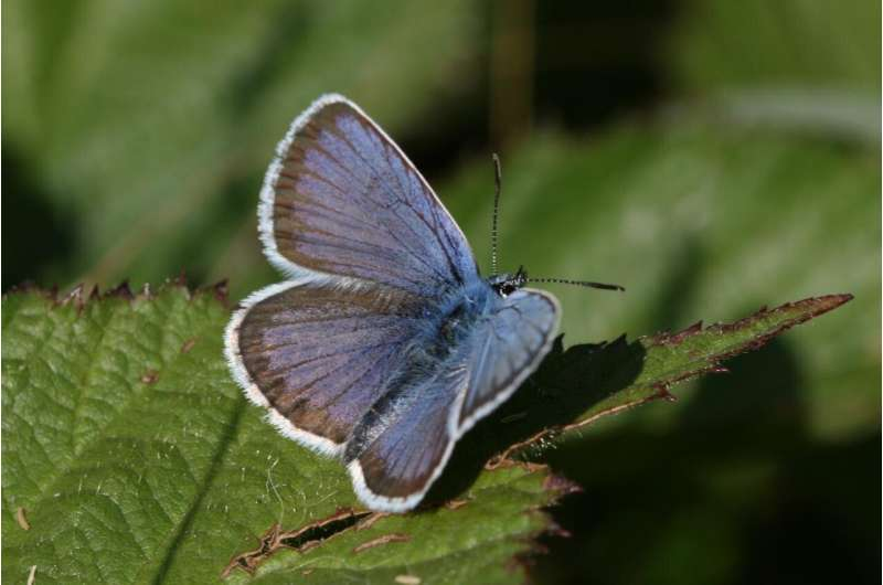Scientists identify British butterflies most threatened by climate change