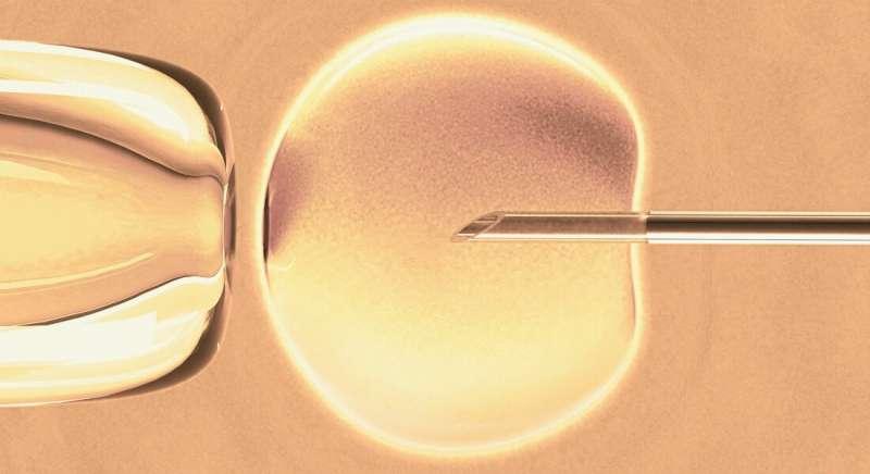 Researchers are finding molecular mechanisms behind women's biological clock