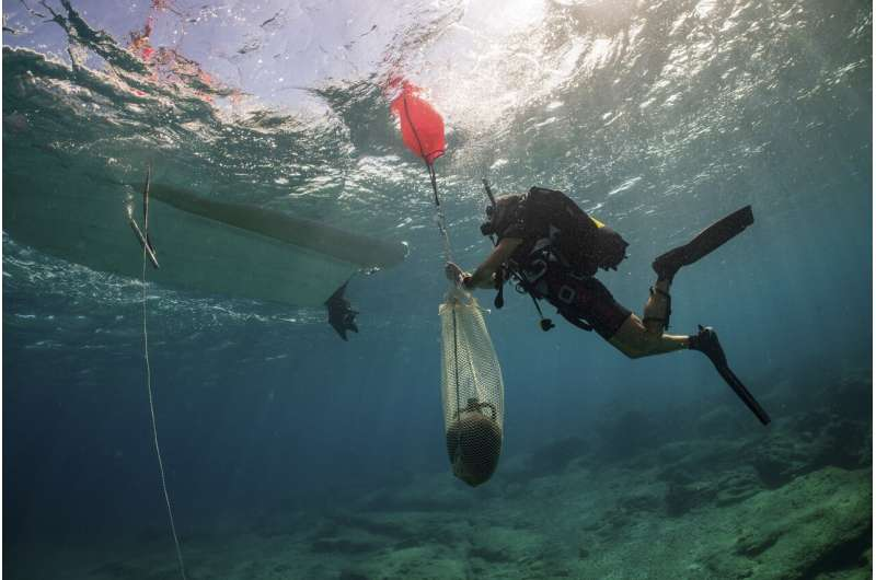 3 ancient shipwrecks discovered off Aegean island of Kasos
