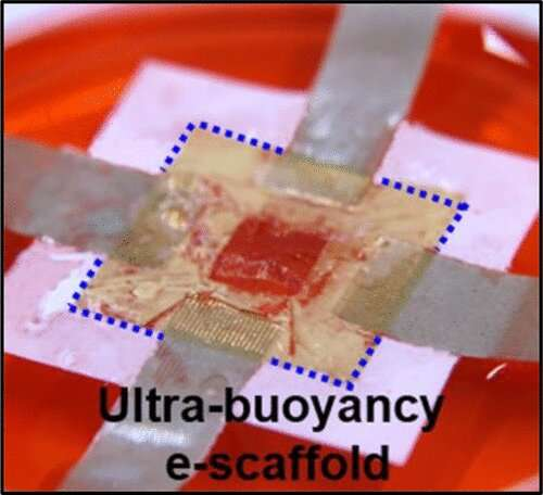 3-D body mapping could identify, treat organs, cells damaged from medical conditions