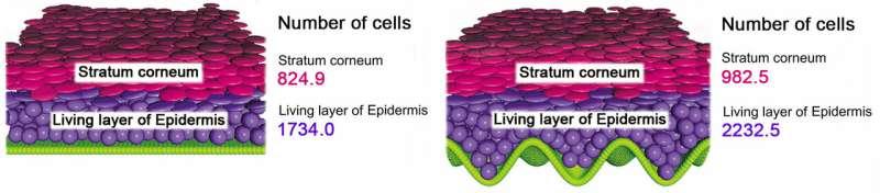 3D human epidermal equivalent created using math