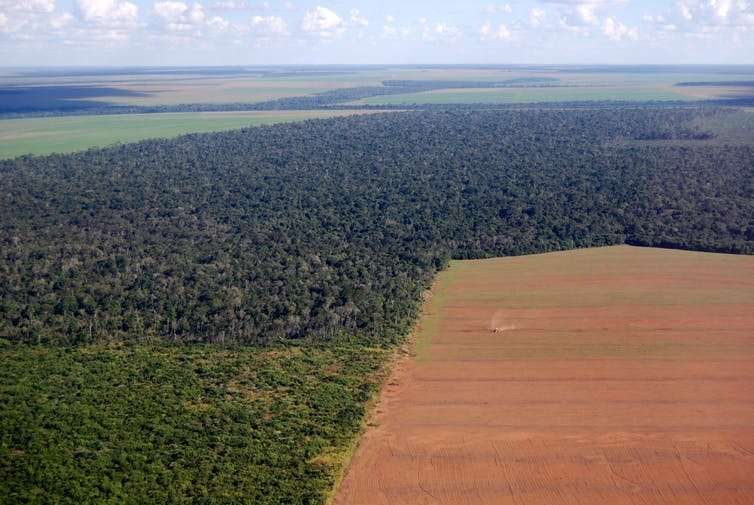**Amazon fires: eight ways you can help stop the rainforest burning