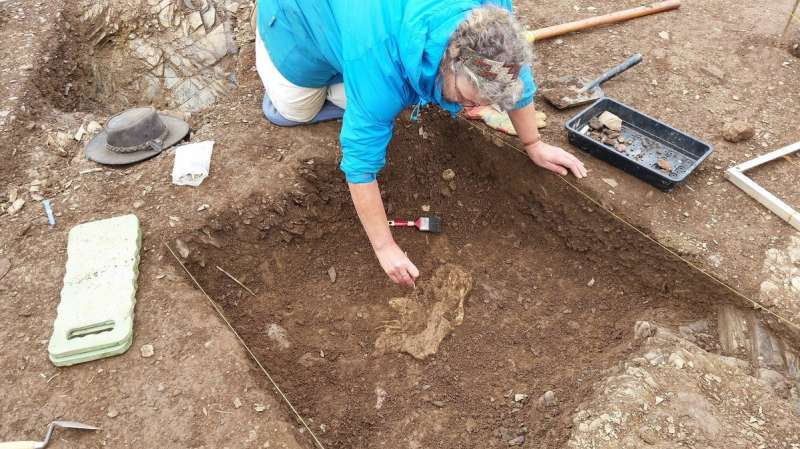 Discovery of rare Roman cattle bones sheds new light on ancient farming