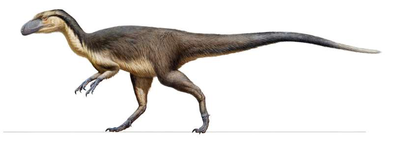 First evidence of feathered polar dinosaurs found in Australia