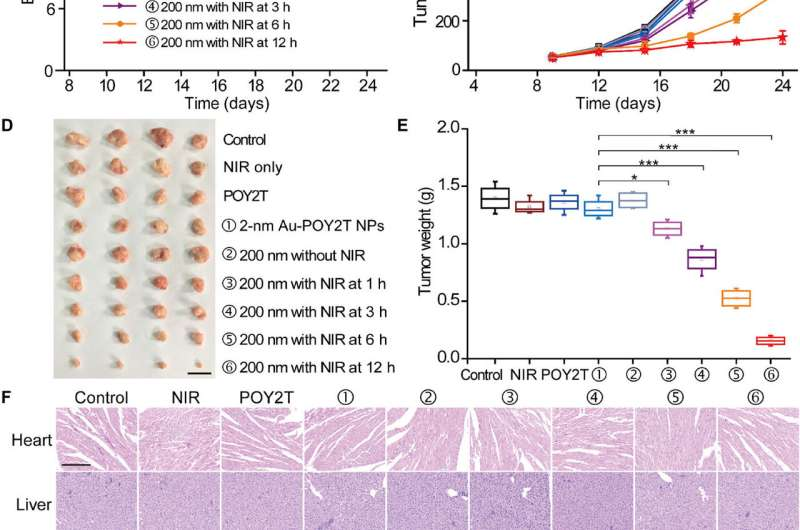 Gold-DNA nanosunflowers for efficient gene silencing and controlled transformation
