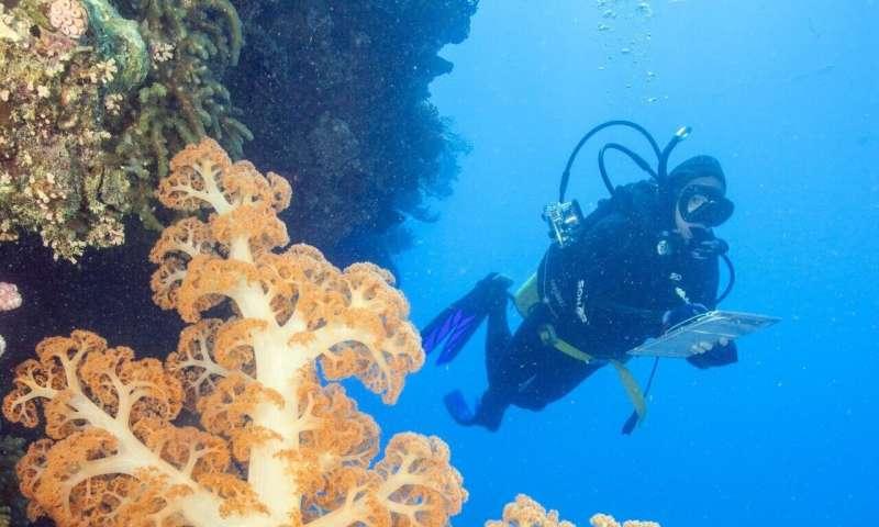 Great Barrier Reef island coral decline