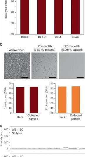 Isolating intact bacteria from blood using a microfluidic monolith device
