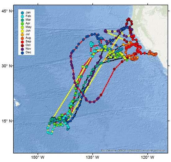 Mako shark tracking off west coast reveals 'impressive' memory and navigation
