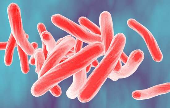 New study reveals how TB bacteria may survive in human tissues