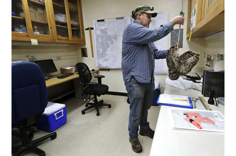 Owl killings spur moral questions about human intervention