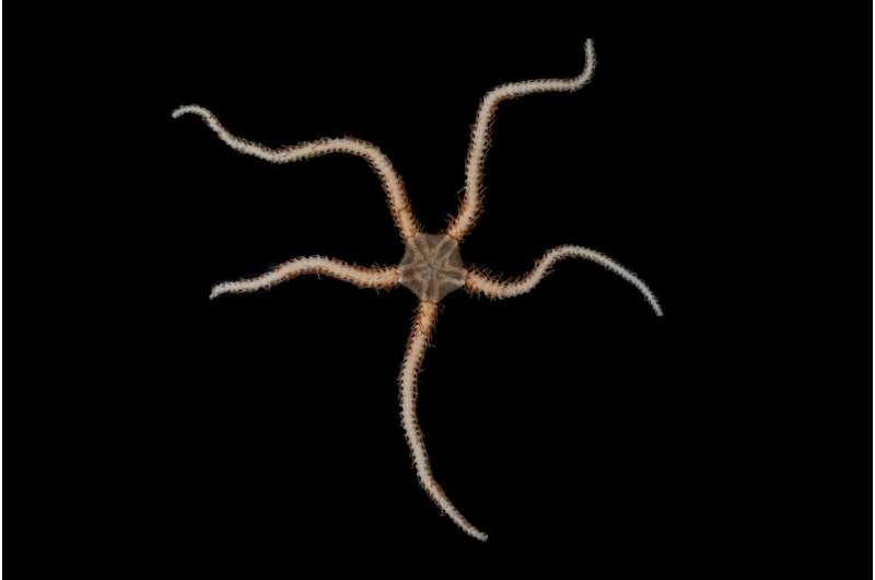 **Research reveals new species are evolving fastest in Antarctica