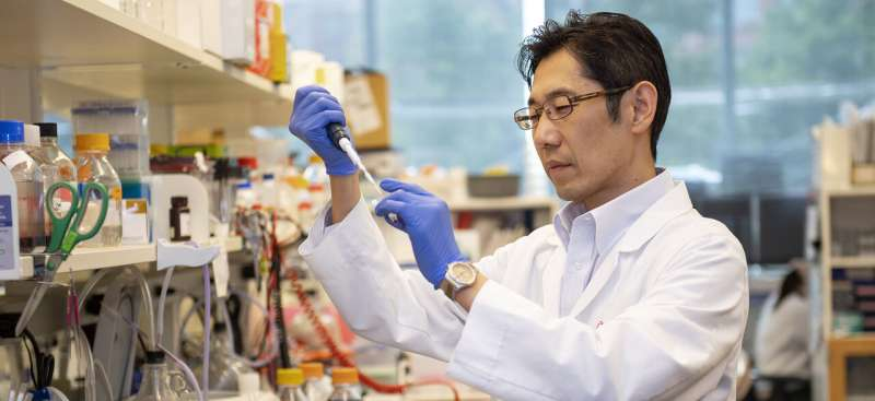 UC researchers unlock cancer cells' feeding mechanism, central to tumor growth