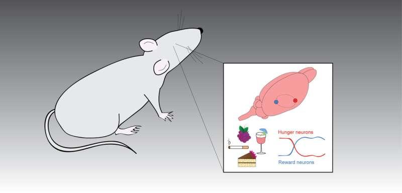 Unraveling the brain's reward circuits