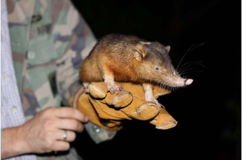Unravelling the venomous bite of an endangered mammal
