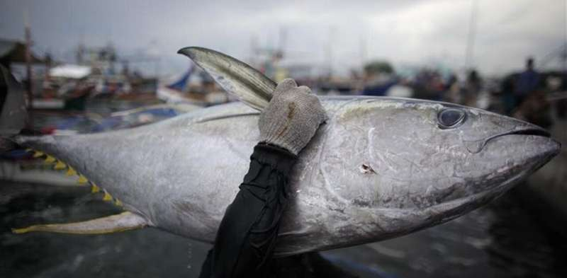 Artificial intelligence makes fishing more sustainable by tracking illegal activity