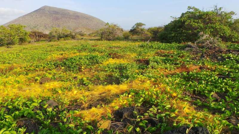 Agricultural parasite avoids evolutionary arms race, shuts down genes of host plants