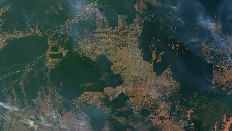 Amazon rainforest fires: everything you need to know