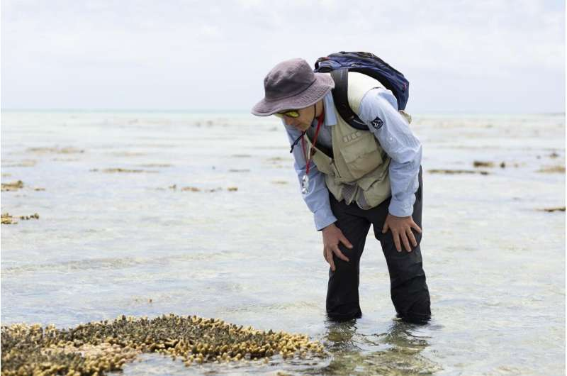 Great Barrier Reef study shows how reef copes with rapid sea-level rise