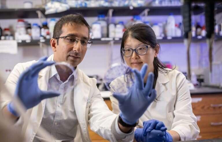 Scientists implicate genes behind faulty DNA repair in breast cancer