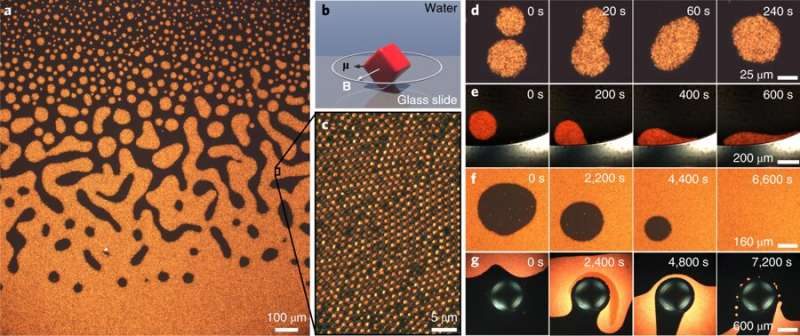 Two-dimensional chiral fluid mostly follows hydrodynamics theories