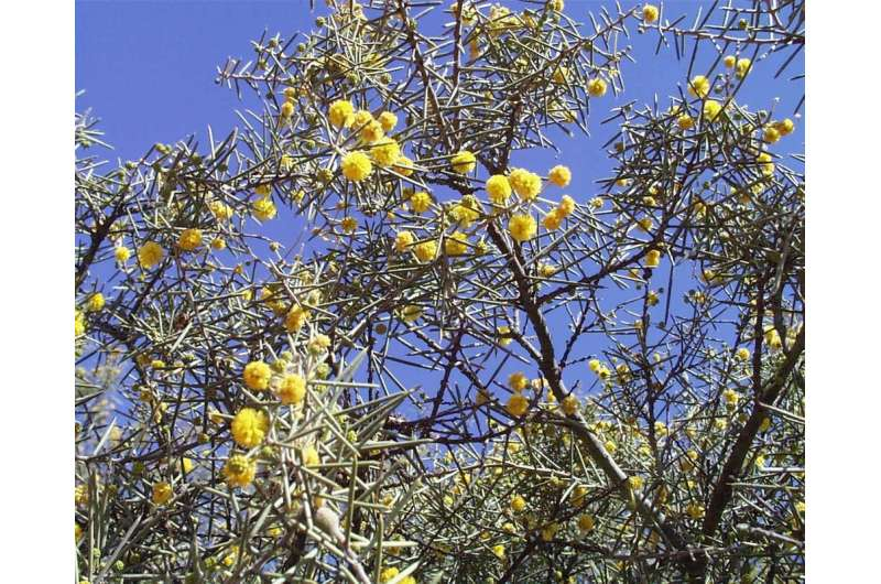 Undocumented plant extinctions are a big problem in Australia – here's why they go unnoticed
