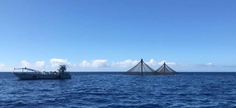 Researchers see a wealth of potential for aquaculture in the Caribbean