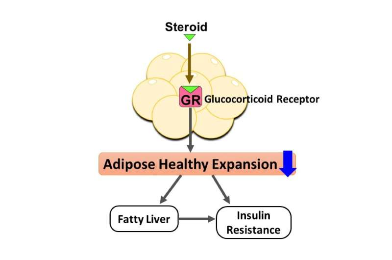 Adipocyte glucocorticoid receptors play a role in developing steroid diabetes
