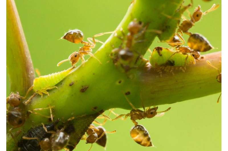 Biological diversity stabilizes species interactions