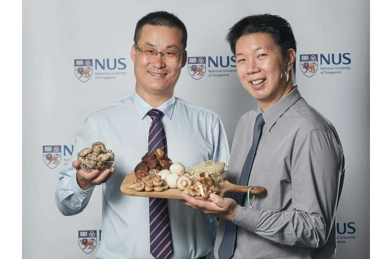 Eating mushrooms may reduce the risk of cognitive decline