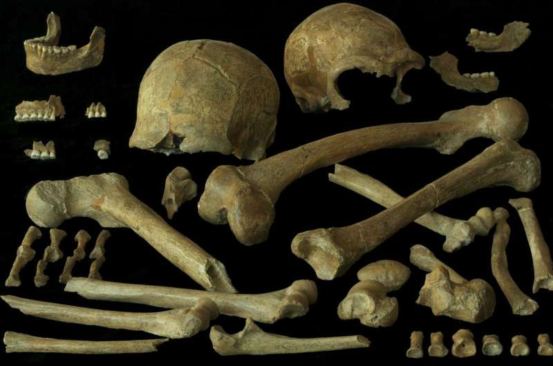 Patterns of diet and mobility in the last Neandertals and first modern humans